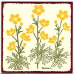 Buttercup Flowers Tile, Wall Plaque, Trivet BB-16 $32.95